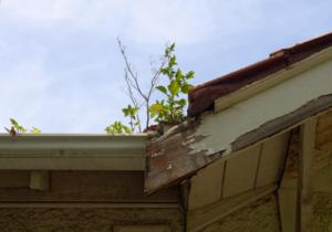 dry rot roof repairs